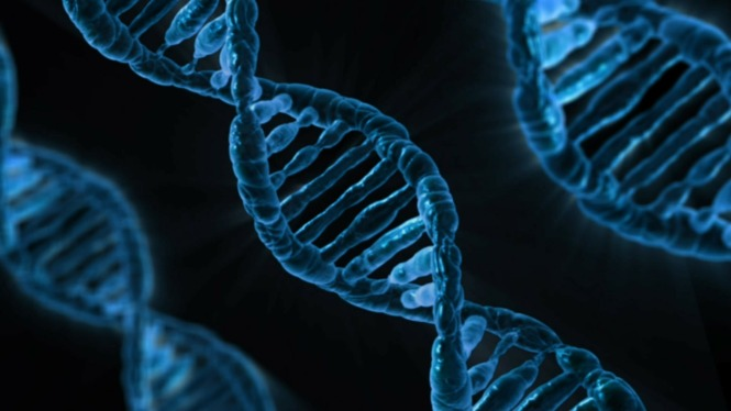 Understanding how DNA interacts with light is one of the big challenges in science today. Credits: http://pixabay.com/en/dna-biology-medicine-gene-163466/