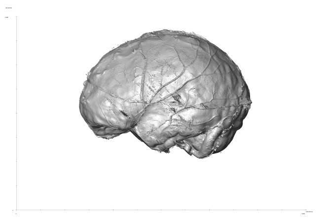 Reconstruction of a Homo sapiens brain based on the x-ray microtomography of a skull from the Museum of Natural History, Trieste. Credits: ICTP