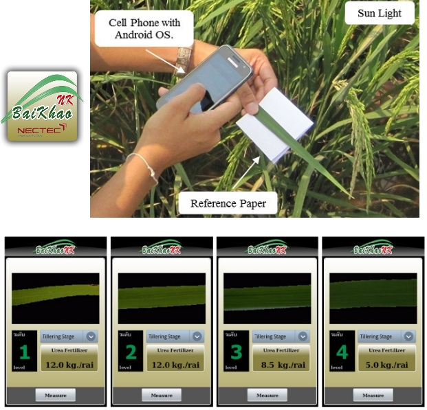 "A smart mobile phone embedded with ""BaiKhaoNK"" application program is used to analyze the rice leaf. Credit: Sarun Sumriddetchkajorn"