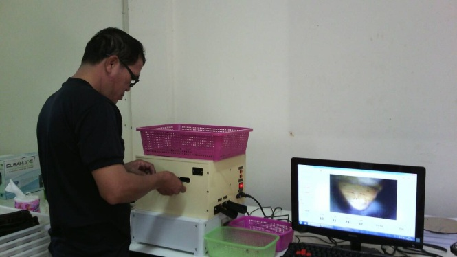 An officer of QSC in Thailand is using the GS2 for identifying and separating gender of silkworm pupae. Credit: Sarun Sumriddetchkajorn.