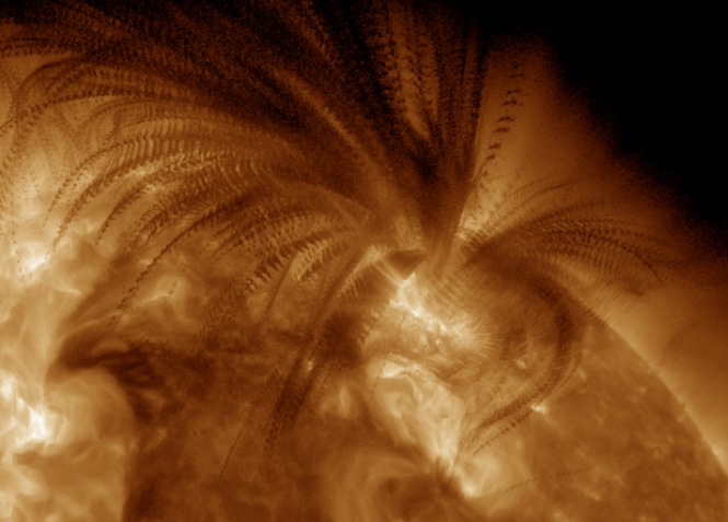 On 2011/07/06 the Sun exhibited a very large eruption, in which a large, massive filament was thrown up from the surface. The cool, dark material absorbed EUV light coming from behind it, causing a dark appearance of the ejection material. Whereas commonly most of such ejected material becomes part of a coronal mass ejection moving into the planetary system, in this case most fell down again subject to solar gravity. This image is a stroboscopic composite from a sequence of originals taken one minute apart. Putting all this together makes a shape reminiscent of a sword fern. Solar scientists use these trajectories to measure where material moves largely in free fall (ballistically) and where the magnetic forces become comparable to gravity to bend matter away. One example of such bending can be seen to the right of center, low in the image, and others in the upper left. Credit: NASA.