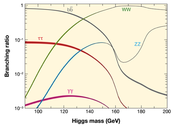 Branching Ratio of the Higgs boson following the Standard Model prediction for each possible Higgs boson mass. Credit: CERN.